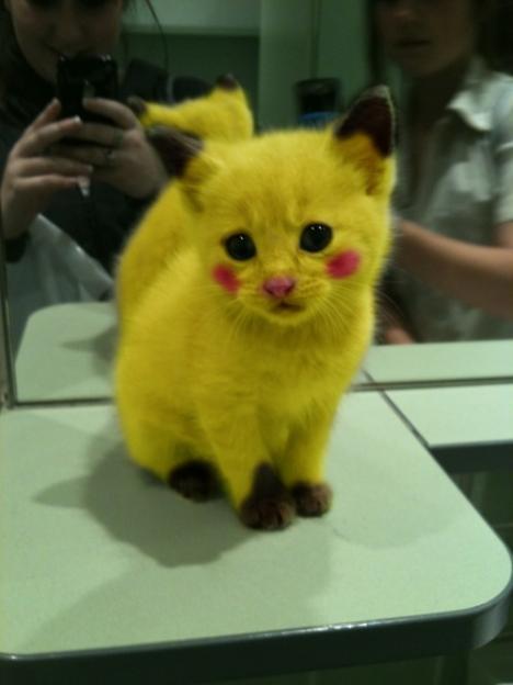 En stackars katt blir utklädd till Pikachu