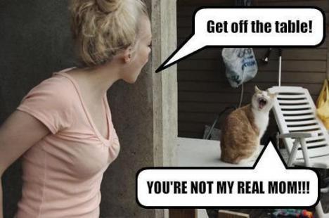 Katt sätter hårt mot hårt