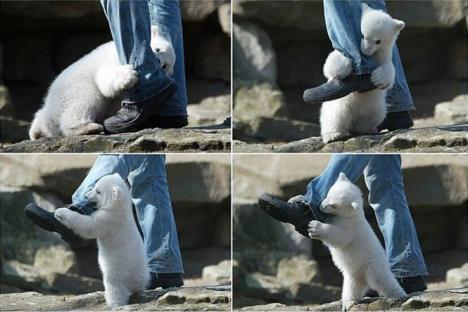 Person attackerad av en isbjörn och överlever