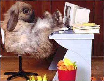 Kanin bakom sin nya mac....