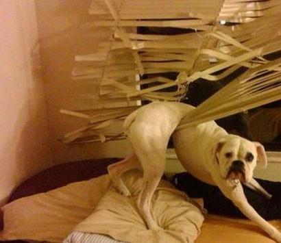 Hund som får svårt att förklara sig oskyldig