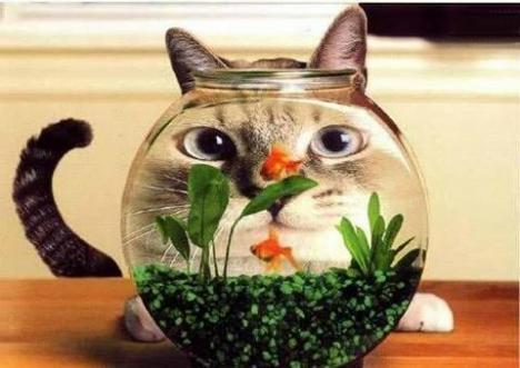 En katt och en fiskskål