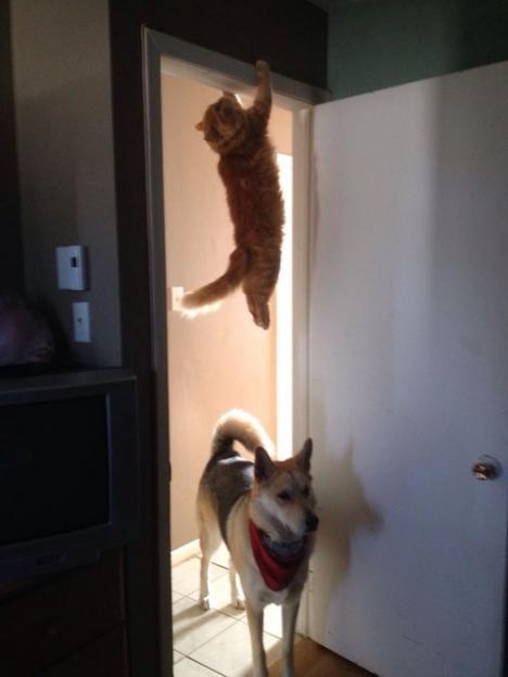 Hund söker katt