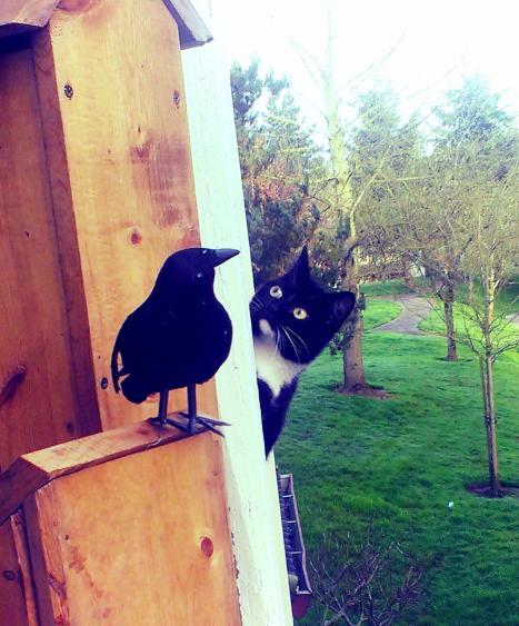 Katt nyfiken på korp