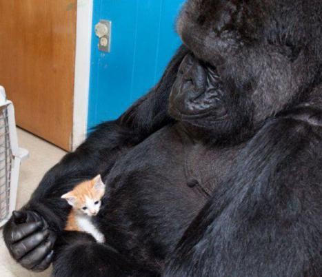 Katt med ovanlig pappa
