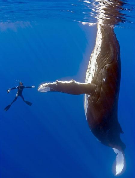 Fantastiskt foto: Dykare hälsar på val