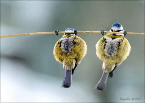 Pull-ups för fåglar