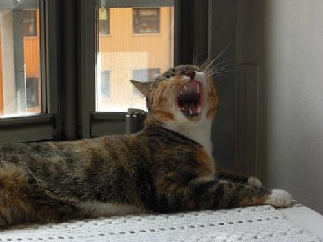 Mera gäspande katt i kubik;)